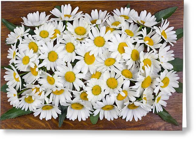 Power Plants Greeting Cards - Daisies on the oak panel Greeting Card by Aleksandr Volkov