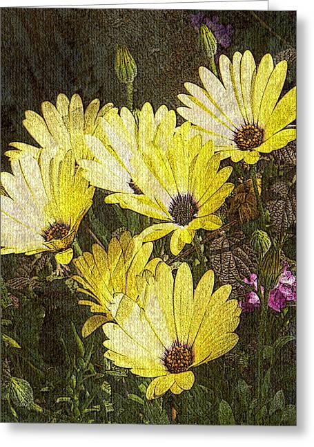 Daisy Daisy Greeting Card by Tom Romeo