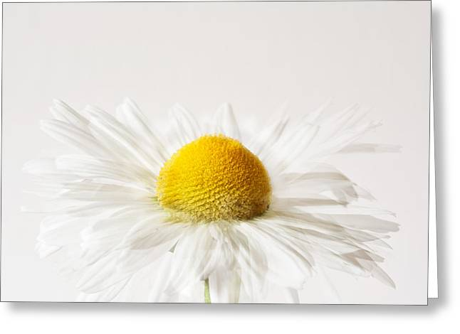 Multiple Exposures Greeting Cards - Daisy Impression Greeting Card by Janet Burdon