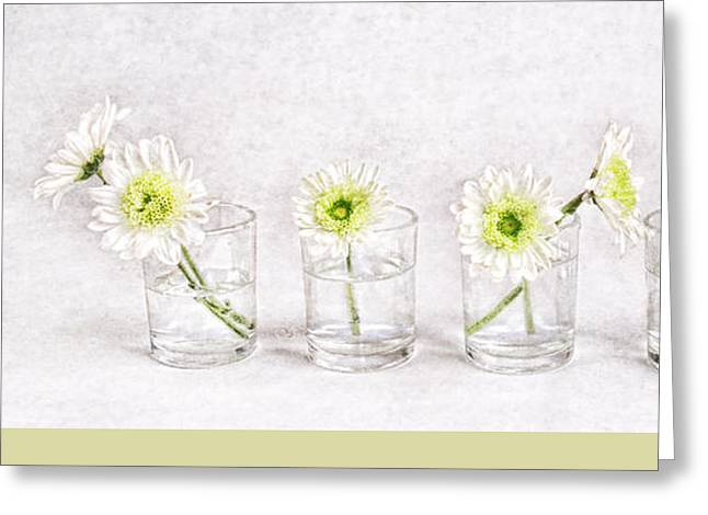 Glass Vase Greeting Cards - Daisy Line Up Greeting Card by Vicki McLead