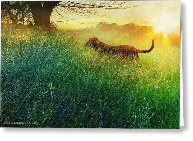 Puppy Digital Art Greeting Cards - Daisy Maes Morning Romp Greeting Card by R christopher Vest