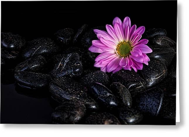 Daisy On The Rocks Greeting Card by Tom Mc Nemar