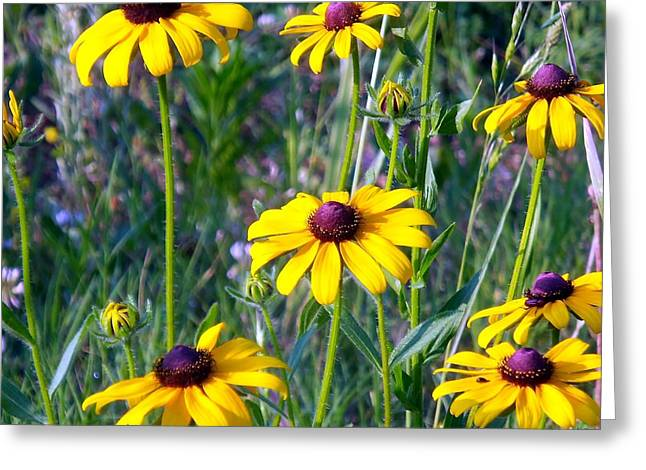 Daisy Ring Greeting Card by Kay Sawyer