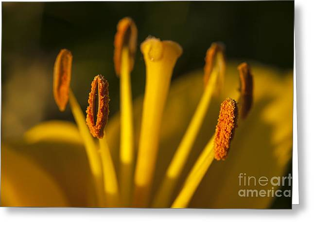 Close Focus Nature Scene Greeting Cards - Daisy stamen and pistil Greeting Card by Jim Corwin