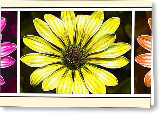 Floral Digital Art Greeting Cards - Daisy Triptych 2 Greeting Card by Bill Caldwell -        ABeautifulSky Photography