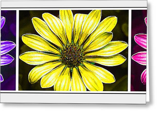 Floral Digital Art Greeting Cards - Daisy Triptych Greeting Card by Bill Caldwell -        ABeautifulSky Photography
