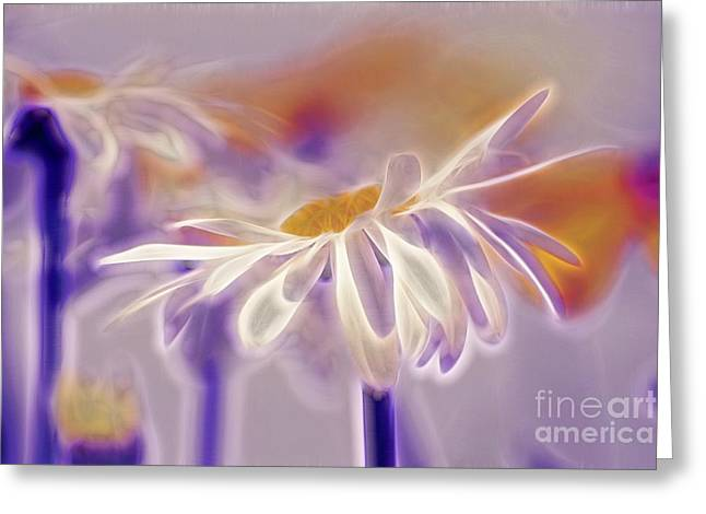 White Daisy Greeting Cards - Daisyday - 101b Greeting Card by Variance Collections