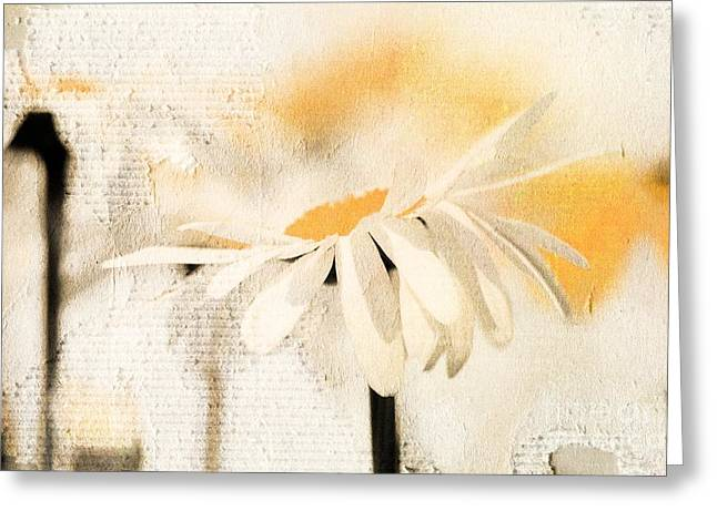 White Daisy Greeting Cards - Daisyday - 56at01 Greeting Card by Variance Collections