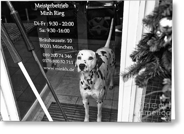 Dog In Window Greeting Cards - Dalmatian in the Window Greeting Card by John Rizzuto