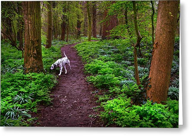 Viridian Greeting Cards - Dalmatian In the Spring Woods Greeting Card by Jenny Rainbow