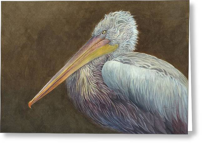 Sea Birds Greeting Cards - Dalmatian Pelican Greeting Card by Cathleen Savage