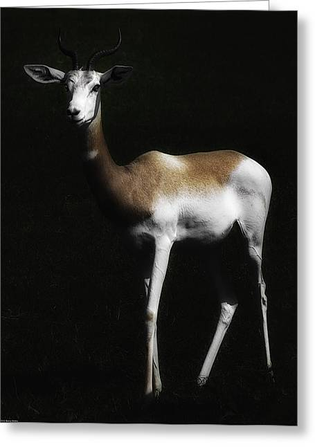 Barry Styles Greeting Cards - Dama Gazelle 1 Greeting Card by Barry Styles