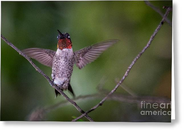 Flying Animal Greeting Cards - Dance like a rock star Greeting Card by Alicia Collins