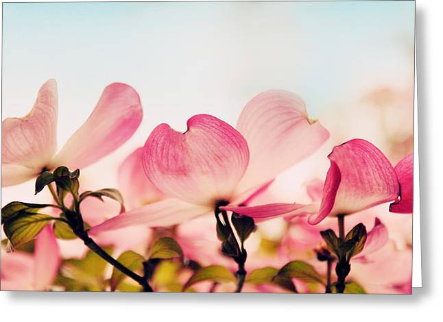 Dogwood Greeting Cards - Dance of the Dogwood Greeting Card by Jessica Jenney