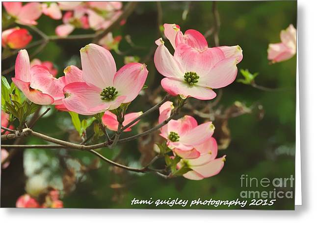Dance Of The Dogwood Greeting Card by Tami Quigley