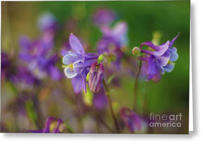 Dance Of The Lavender Columbines Greeting Card by Mike Reid