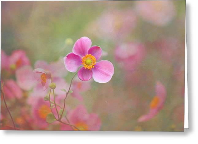 Kim Photographs Greeting Cards - Dance of the Windflower Greeting Card by Kim Hojnacki