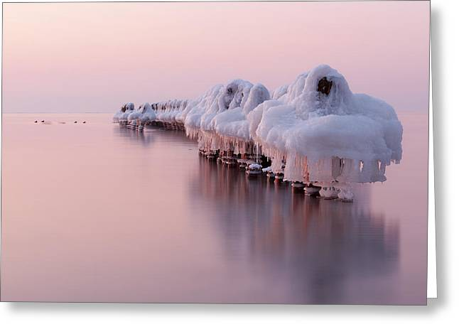 Baltic Sea Greeting Cards - Dance Of White Swans Greeting Card by Dmitry Kulagin