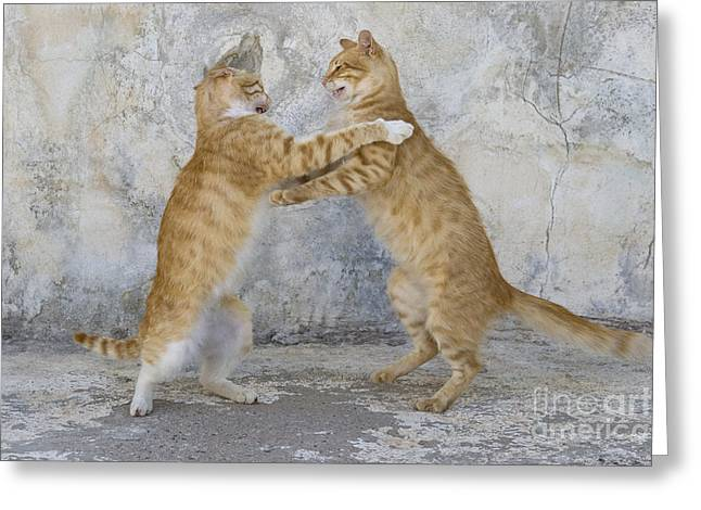 Litter Mates Photographs Greeting Cards - Dancing Cats Greeting Card by Jean-Louis Klein & Marie-Luce Hubert