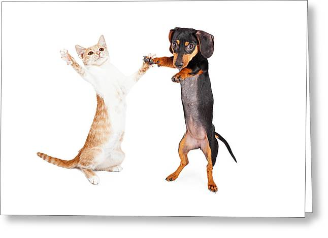 Playful Kitten Greeting Cards - Dancing Doxie Dog and Kitten Greeting Card by Susan  Schmitz