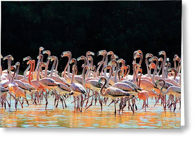 Ocean Panorama Greeting Cards - Dancing Flamingos Greeting Card by Renee Sullivan