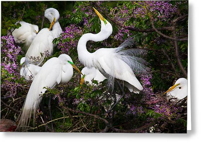 White Bird Greeting Cards - Dancing in flowers - Great Egrets - Texas Greeting Card by Ellie Teramoto