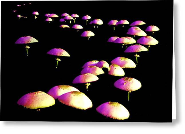 Toad Stool Greeting Cards - Dancing in the Dark Greeting Card by John Foote