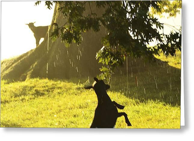 Dancing in the Rain Greeting Card by Thomas R Fletcher