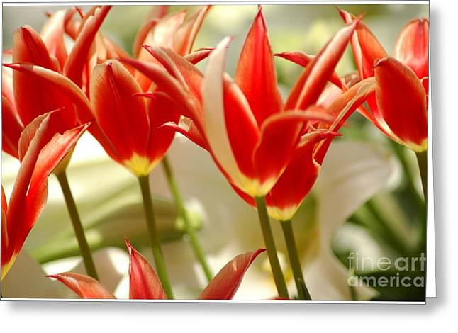 Dancing Tulips Greeting Card by Kathleen Struckle