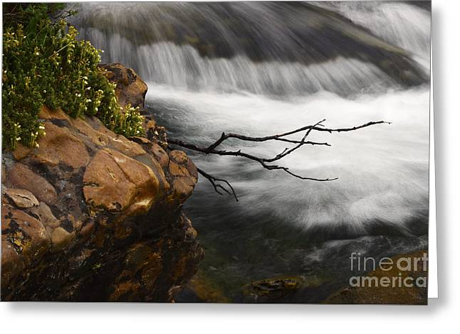 Clean Water Greeting Cards - Dancing Waters 3 Greeting Card by Bob Christopher