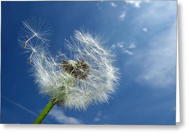 Dandelion And Blue Sky Greeting Card by Matthias Hauser