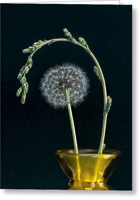 Wishes Greeting Cards - Dandelion and Grass Greeting Card by Kurt Golgart