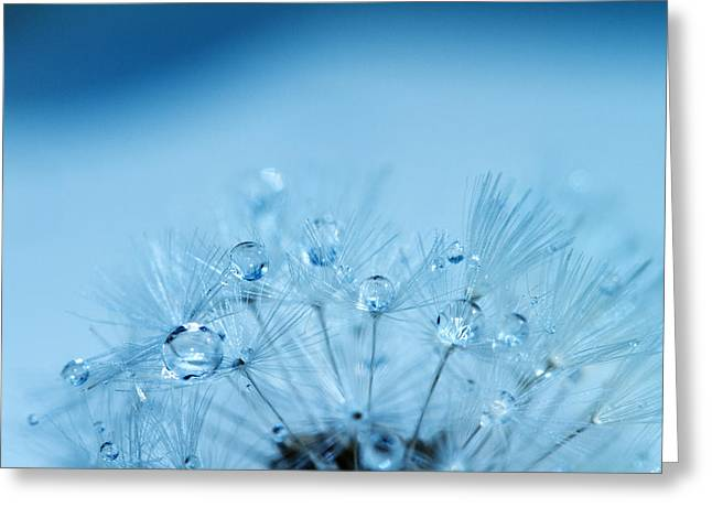 Water Drop Greeting Cards - Dandelion Bouquet Greeting Card by Rebecca Cozart