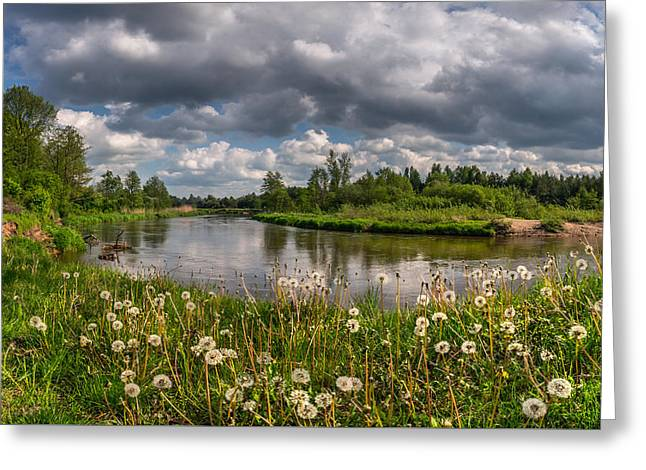 Overcast Day Greeting Cards - Dandelion field on the river bank Greeting Card by Dmytro Korol