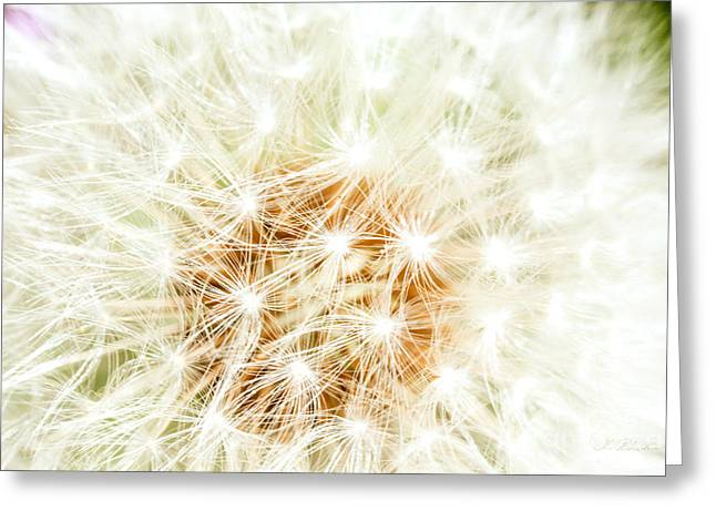 Owner Greeting Cards - Dandelion Florets Greeting Card by Iris Richardson