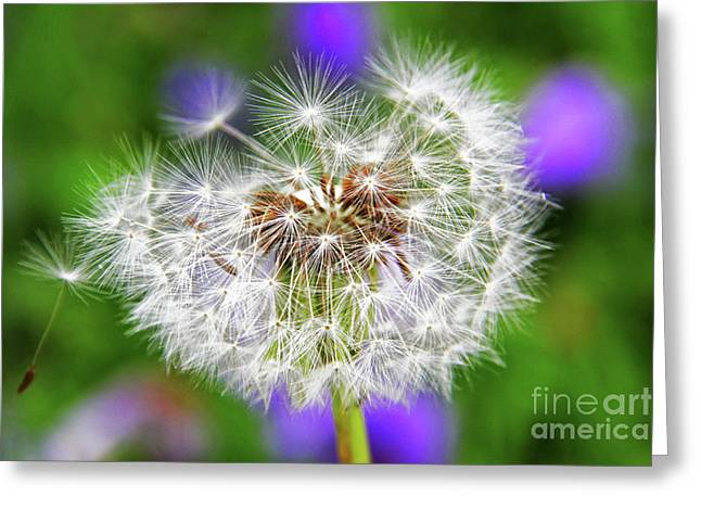 Dandelion Flower Greeting Card by Mariola Bitner