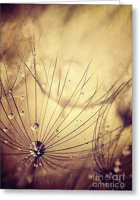 Beige Abstract Greeting Cards - Dandelion flowers background Greeting Card by Anna Omelchenko