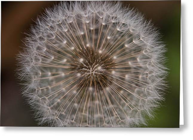 Wishes Greeting Cards - Dandelion Fluff Greeting Card by Shanna Britt