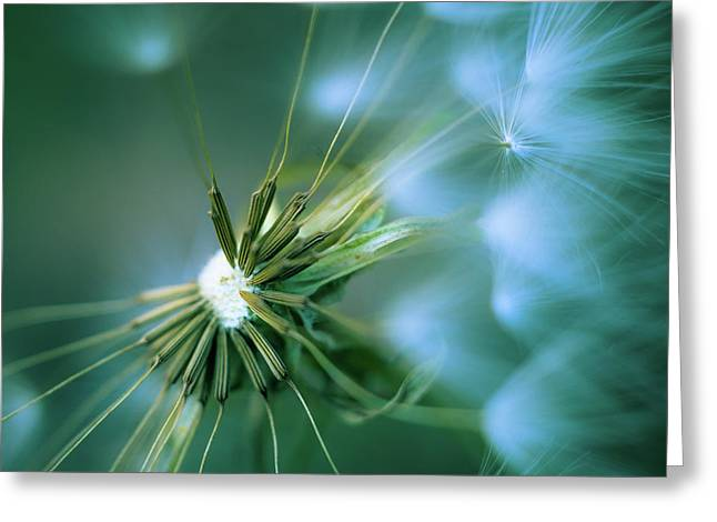 Pacific Crest Trail Greeting Cards - Dandelion III Greeting Card by Alexander Kunz