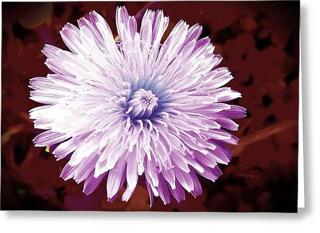 Artistic Photography Greeting Cards - Dandelion In Purple Greeting Card by Missy  Brage