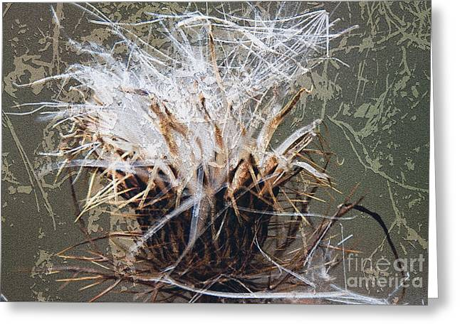 Abstract Digital Photographs Greeting Cards - Dandelion Greeting Card by Martina Parsley
