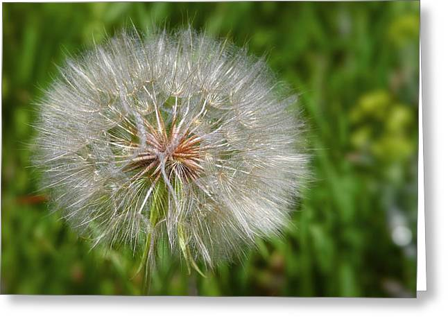 Dandelion Puff - The Summer Queen Greeting Card by Christine Till