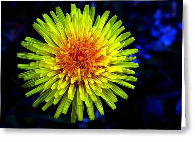 Unfold Greeting Cards - Dandelion Greeting Card by Robert Knight