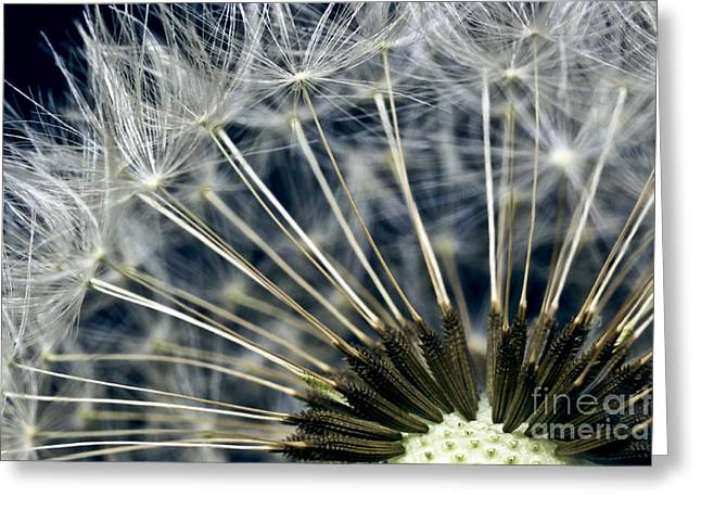 Macro Finalized Photographs Greeting Cards - Dandelion Seed Head Greeting Card by Ryan Kelly