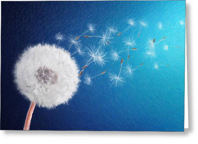 Fineartamerica Greeting Cards - Dandelion seed in background blue Greeting Card by Bess Hamiti