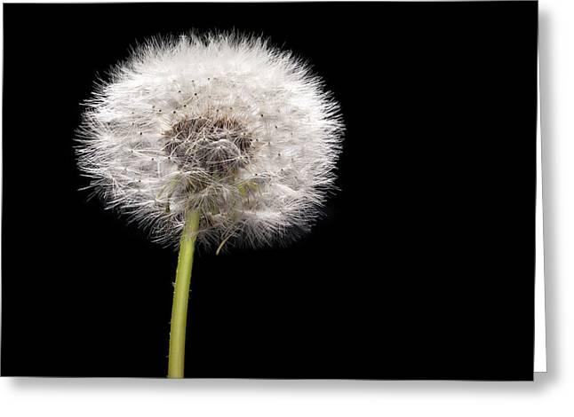 Weed Greeting Cards - Dandelion Seedhead Greeting Card by Steve Gadomski