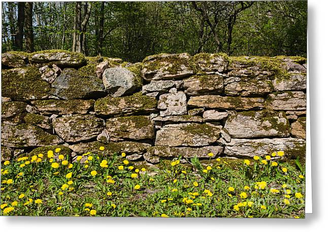 Moss Greeting Cards - Dandelions at mossy stone wall Greeting Card by Kennerth and Birgitta Kullman