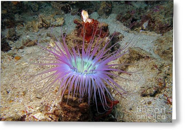 Underwater Photos Greeting Cards - Dangerous underwater flower Greeting Card by Sergey Lukashin