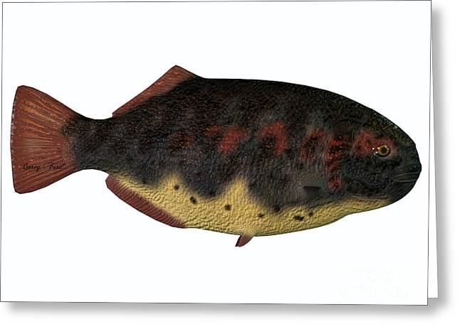Sea Life Digital Art Greeting Cards - Dapedius Fish on White Greeting Card by Corey Ford