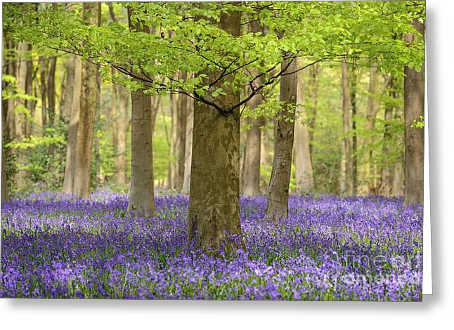 Dappled Blue Greeting Card by Richard Thomas